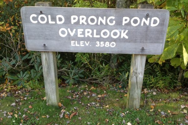 Cold Prong Trail-Blue Ridge Parkway-Milepost 299