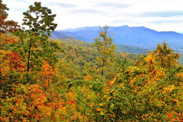 Fox Hunters Paradise-Blue Ridge Parkway-Milepost 218.6